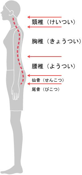背骨のS字